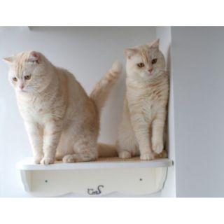 cats design nr 01 katzen regal cats f 29 99. Black Bedroom Furniture Sets. Home Design Ideas
